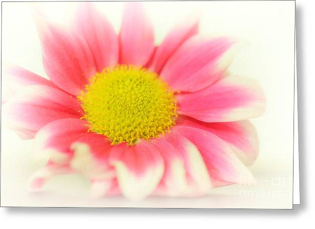 Fragrant Greeting Cards - Bloom oOo Greeting Card by SK Pfphotography