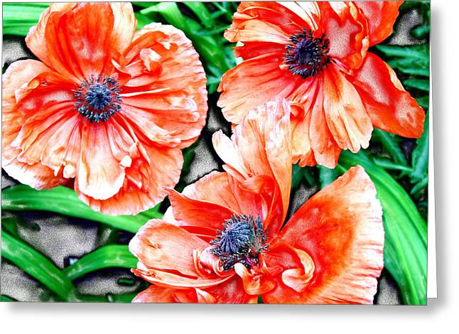 Bloom...floral Greeting Card by Tom Druin