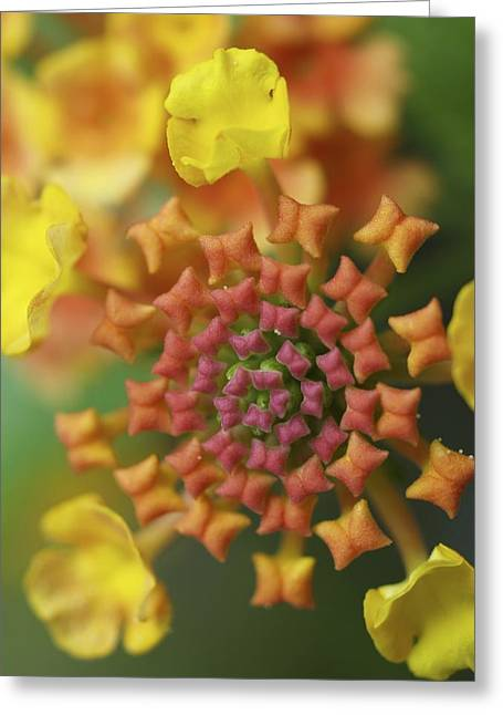 Blooming Art Greeting Card by Patricia McKay