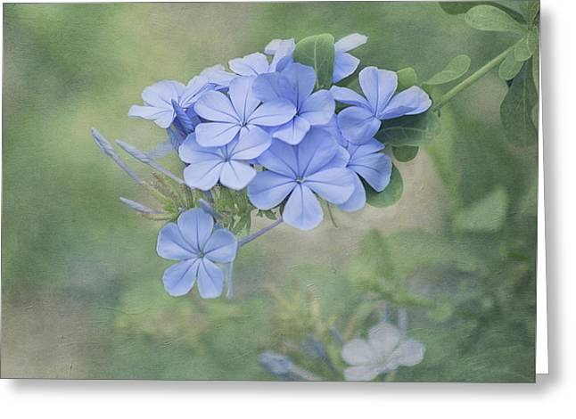 Subtle Colors Greeting Cards - Blooming Blues Greeting Card by Kim Hojnacki