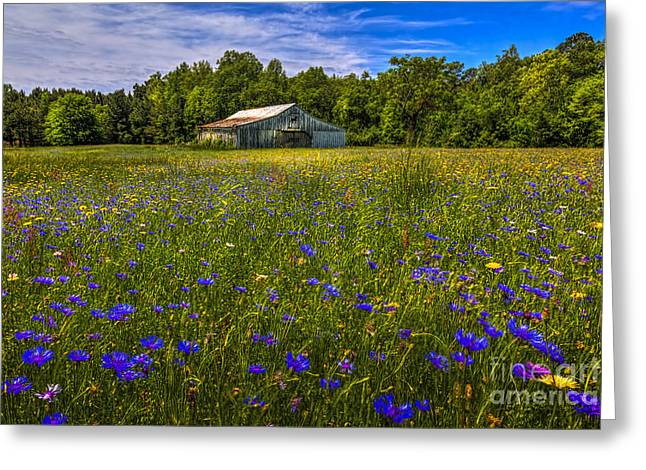Fence Line Greeting Cards - Blooming Country Meadow Greeting Card by Marvin Spates