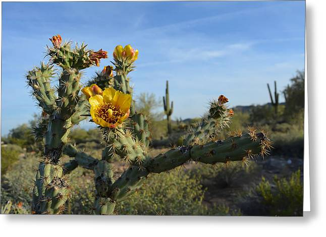 Blossom Greeting Cards - Blooming Desert Cactus Greeting Card by Aimee L Maher Photography and Art