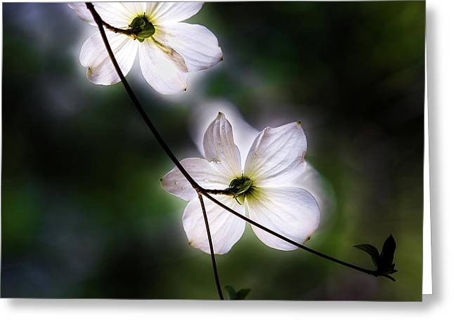 Blooming Dogwoods In Yosemite 2 Greeting Card by Larry Marshall