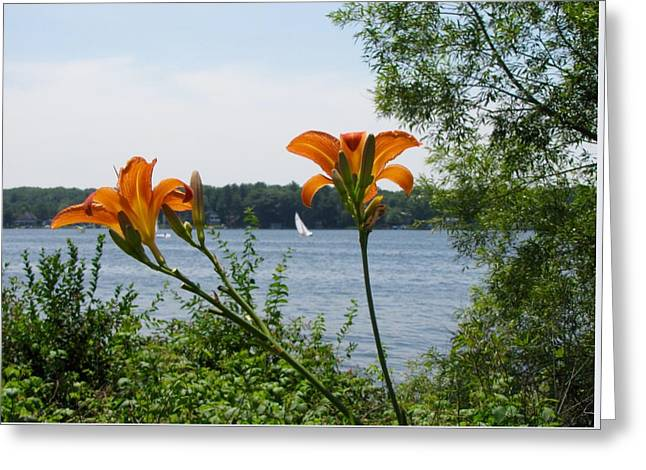 Sailboats In Water Greeting Cards - Blooming in the Wind Greeting Card by Jane Greiner