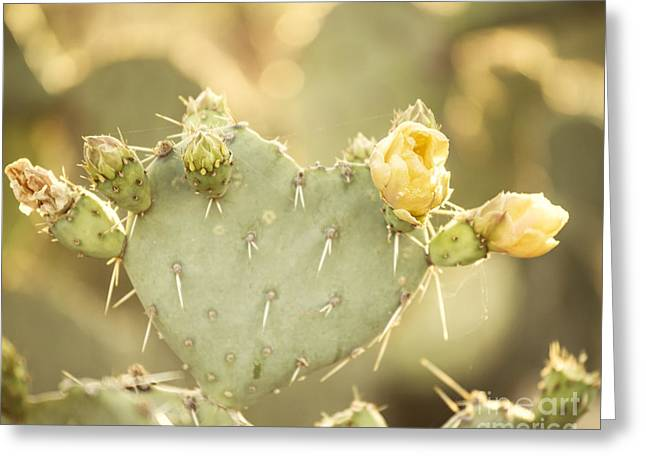 Cactus Flowers Greeting Cards - Blooming Prickly Pear Cactus Greeting Card by Juli Scalzi