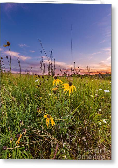 Blooming Sunset Greeting Card by Andrew Slater