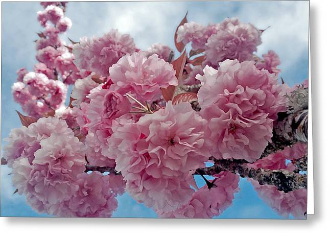 Pink Flower Branch Greeting Cards - Blossom Bliss Greeting Card by Gwyn Newcombe