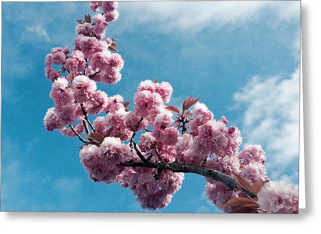 Pink Flower Branch Greeting Cards - Blossom Impressions Greeting Card by Gwyn Newcombe