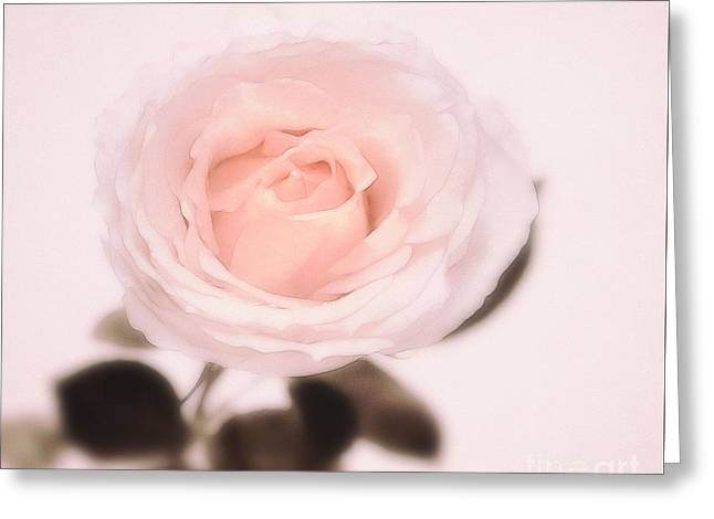 Fragrant Greeting Cards - Blossom oOo Greeting Card by SK Pfphotography