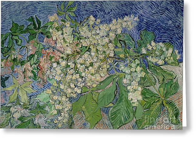 Blossoming Greeting Cards - Blossoming Chestnut Branches Greeting Card by Vincent Van Gogh