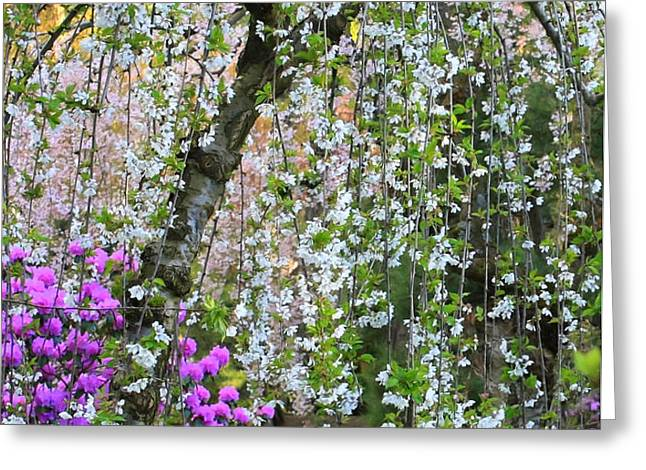 Blossoms Galore Greeting Card by Carol Groenen