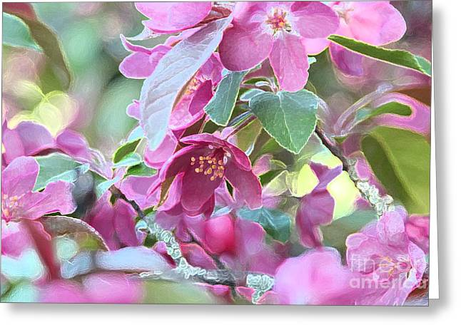Maine Spring Greeting Cards - Blossoms Greeting Card by Laura Mace Rand