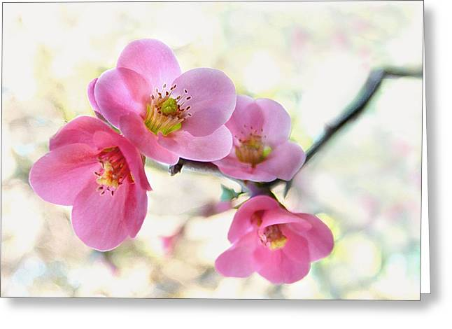 Fruit Tree Photographs Greeting Cards - Blossoms Greeting Card by Marion Cullen