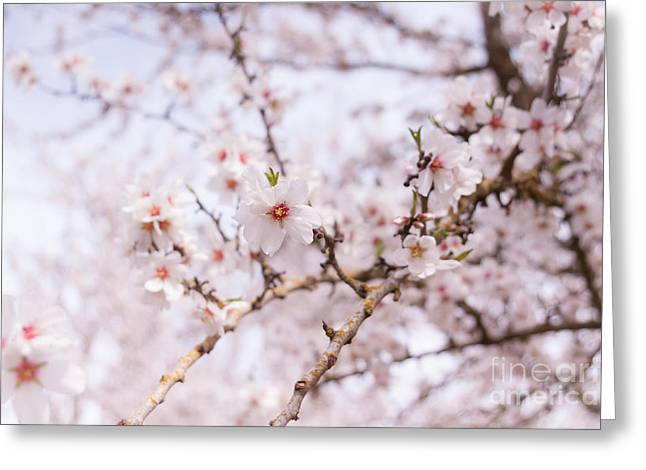 Pink Flower Branch Greeting Cards - Blossoms on a Sunny Day Greeting Card by Ana V  Ramirez