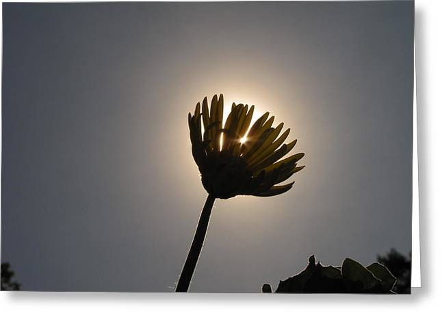 Shane Brumfield Greeting Cards - Blot out the Sun Greeting Card by Shane Brumfield