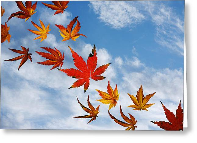 Leafs Greeting Cards - Blow Away With Me Greeting Card by Rebecca Cozart