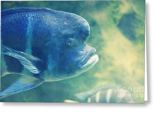 Aquarium Fish Mixed Media Greeting Cards - Blubb Greeting Card by Angela Doelling AD DESIGN Photo and PhotoArt