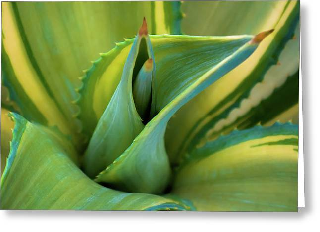 Blue Agave Greeting Card by Karen Wiles