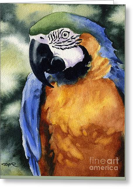 Macaw Art Giclee Greeting Cards - Blue And Gold Macaw Greeting Card by David Rogers