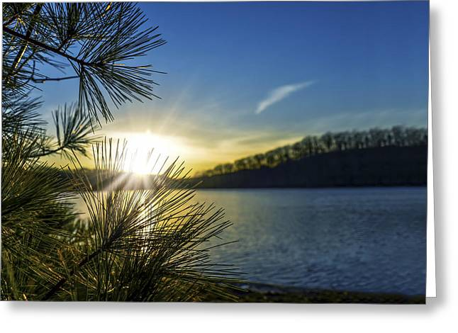 Pine Needles Greeting Cards - Blue And Gold Sunset Greeting Card by Sharon Norman