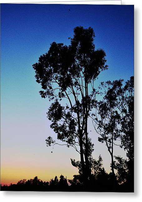 Blue And Gold Sunset Tree Silhouette II Greeting Card by Linda Brody
