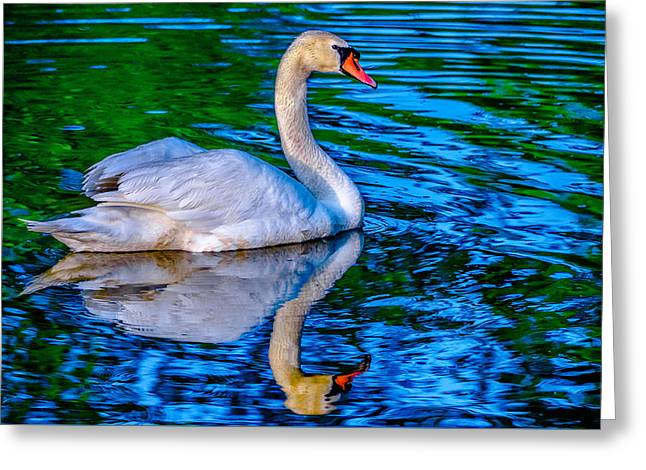 Reflecting Water Greeting Cards - Blue and green sheen Greeting Card by Brian Stevens