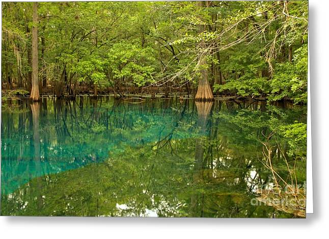 Manatee Springs Greeting Cards - Blue And Green Waters At Manatee Greeting Card by Adam Jewell