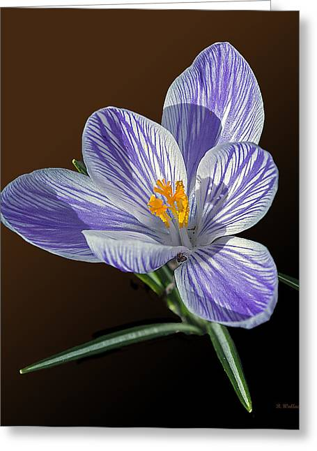 Sfx Greeting Cards - Blue And White Crocus Greeting Card by Brian Wallace