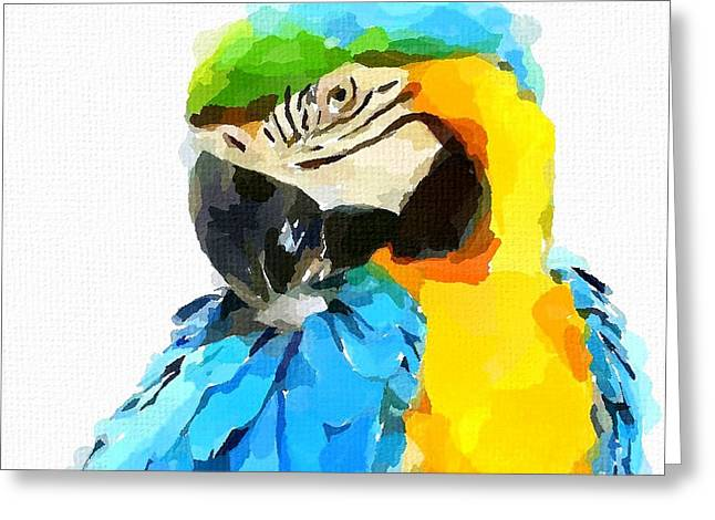 Blue And Yellow Macaw Greeting Cards - Blue and Yellow Macaw Greeting Card by Chris Butler