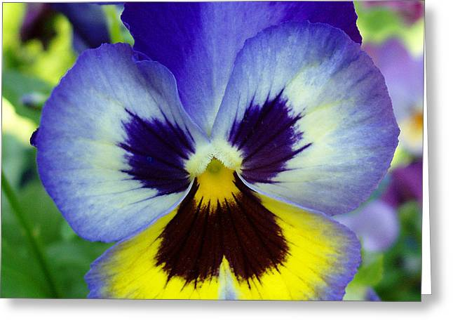Blue And Yellow Pansy Greeting Card by Nancy Mueller
