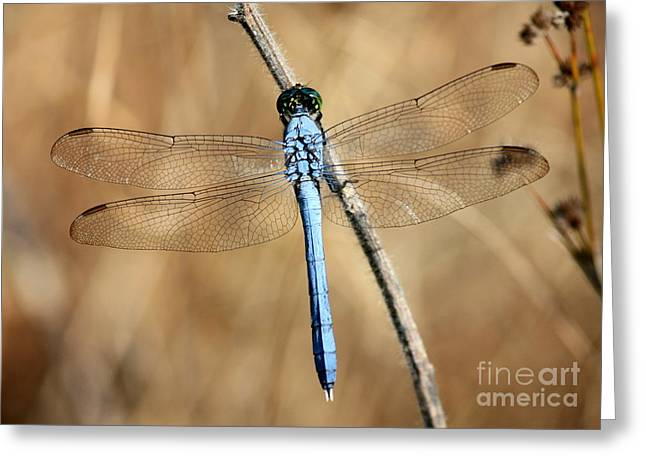 Blue And Brown Greeting Cards - Blue Beauty Greeting Card by Carol Groenen