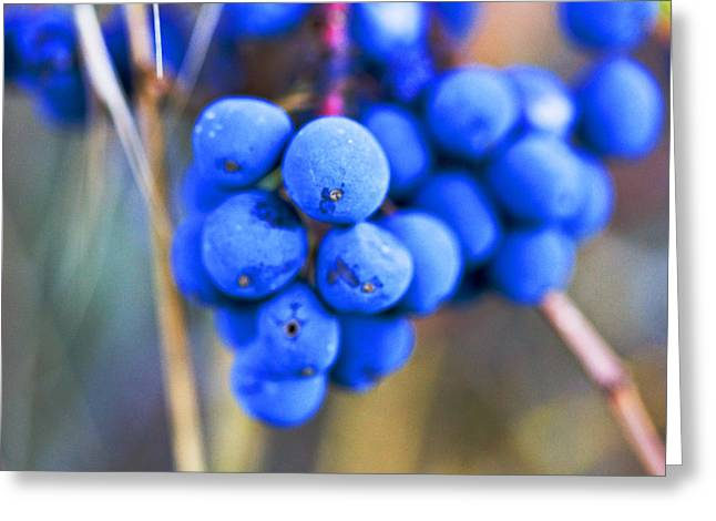 Blue Berries In Autumn Greeting Card by Marie Jamieson