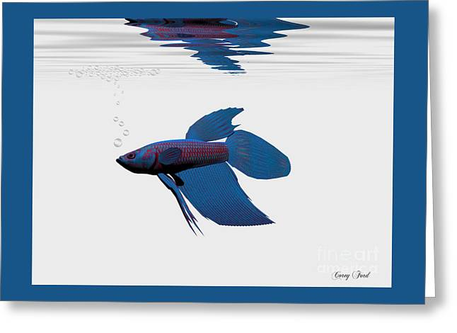 Blue Betta Greeting Card by Corey Ford