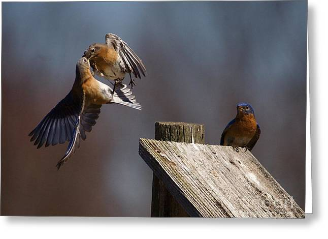 Flying Animal Mixed Media Greeting Cards - Blue Bird Mayhem Greeting Card by Robert Pearson