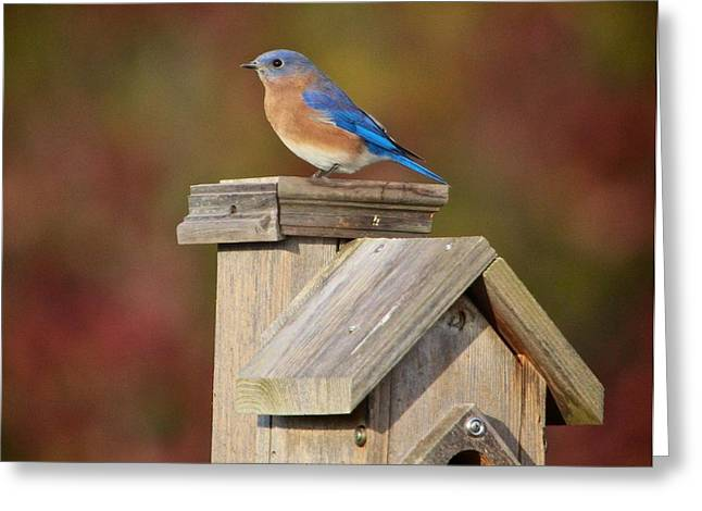 Flying Bird Mixed Media Greeting Cards - Blue Bird Greeting Card by Robert Pearson
