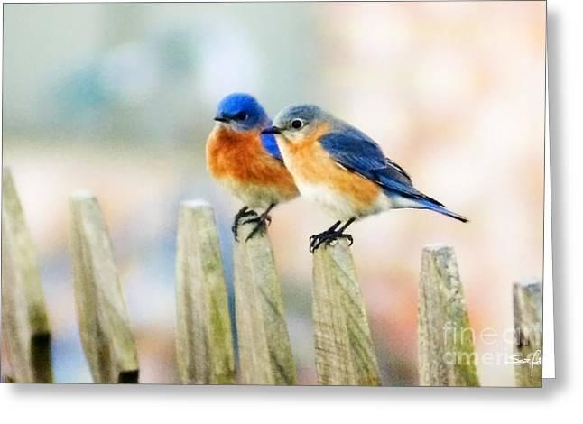 Blue Birds Greeting Card by Scott Pellegrin