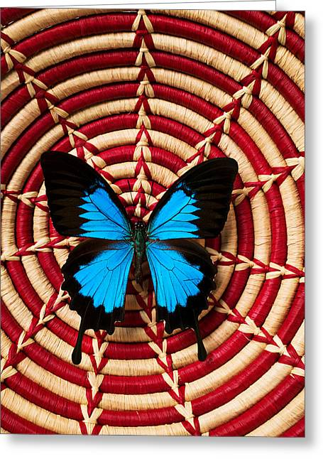 Invertebrates Photographs Greeting Cards - Blue black butterfly in basket Greeting Card by Garry Gay