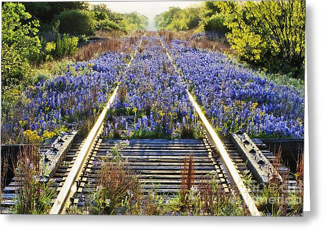Blue Bonnets Greeting Cards - Blue Bonnets on Railroad Tracks Greeting Card by Jeremy Woodhouse