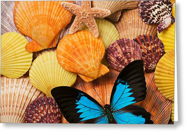 Blue butterfly and sea shells Greeting Card by Garry Gay