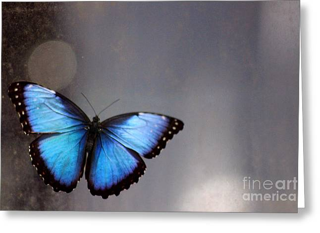 Invertebrates Greeting Cards - Blue Butterfly Dreams Greeting Card by Karen Adams