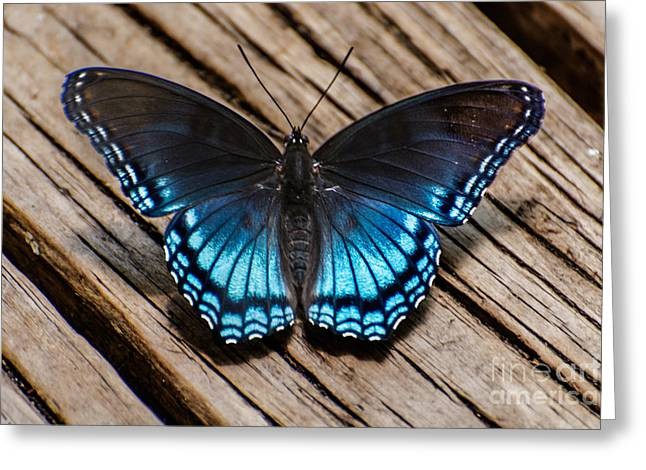 Spring Tapestries - Textiles Greeting Cards - Blue Butterfly Greeting Card by James Hennis
