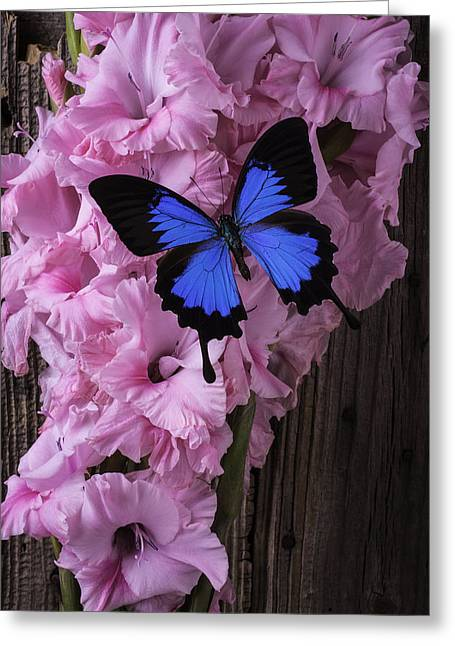 Gladiolus Greeting Cards - Blue Butterfly On Glads Greeting Card by Garry Gay