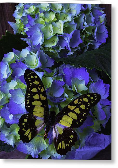 Yellow Butterfly Greeting Cards - Blue Butterfly On Hydrangea Greeting Card by Garry Gay