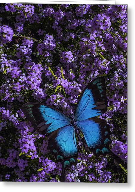 Gorgeous Flowers Greeting Cards - Blue Butterfly On Pink Flowers Greeting Card by Garry Gay
