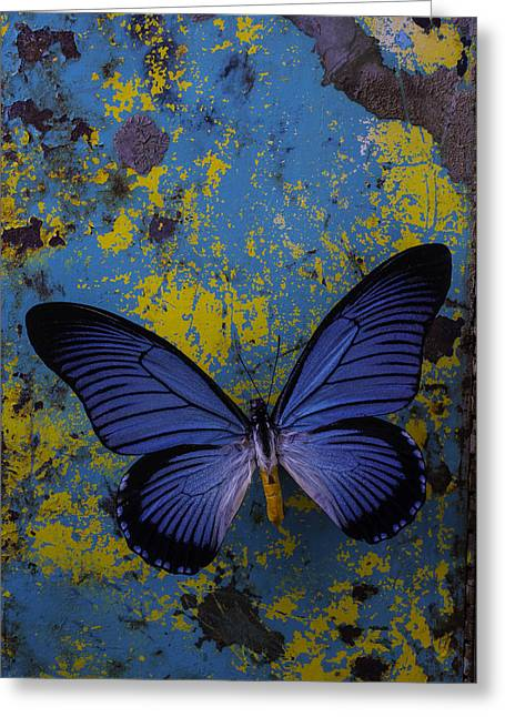 Blue Butterfly On Rusty Wall Greeting Card by Garry Gay
