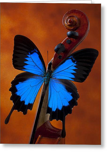 Blue Butterfly On Violin Greeting Card by Garry Gay