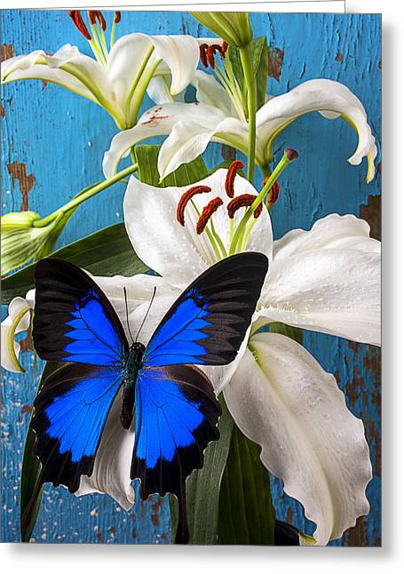 Blue Wings Greeting Cards - Blue butterfly on white tiger lily Greeting Card by Garry Gay