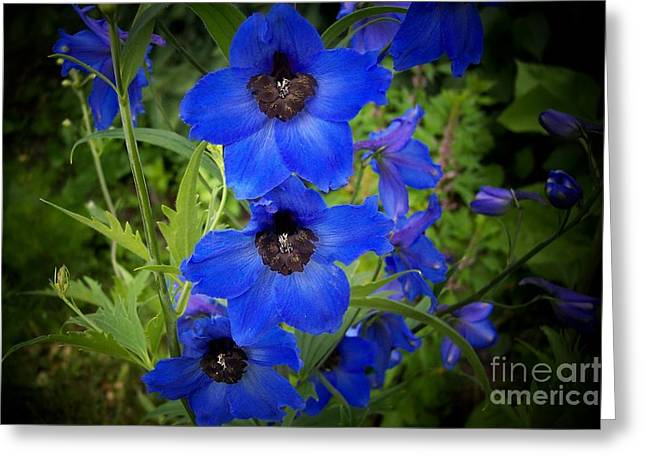 Delphinium Greeting Cards - Blue Delphinium  Greeting Card by Marjorie Imbeau