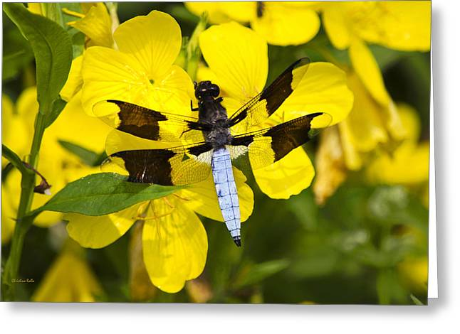 Invertebrates Greeting Cards - Blue Dragonfly On Pretty Yellow Flowers Greeting Card by Christina Rollo