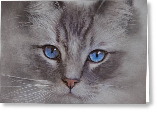Wild Life Drawings Greeting Cards - Blue Eyes Greeting Card by Brita Seifert